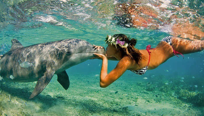 kiss dolphine