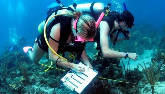 marine biology 5 09 A hands-on introduction to marine biology  09:30 - 11:30 – plankton and major  physical phenomena in the sea 12:00 - 14:00 – introduction.
