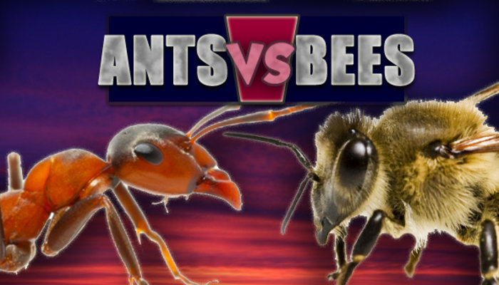 Ants Vs Bees - What kind of worker are you header - Kane Simms