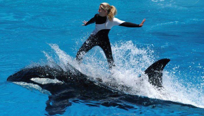 Orca trainer salary